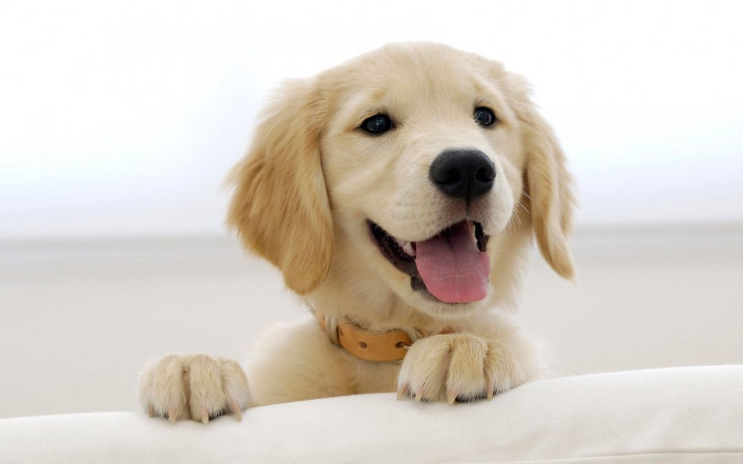 L'educazione di un cane secondo Tambra
