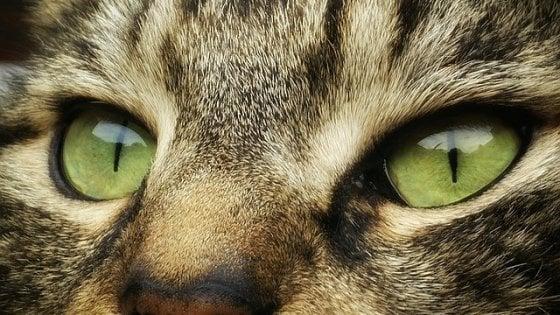 Il gatto questo sconosciuto