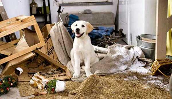 Esauriti nella convivenza con un cane difficile