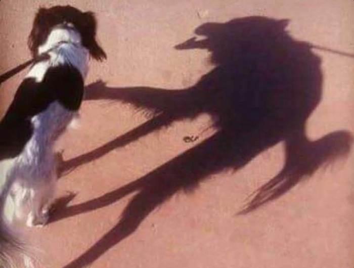 Fobia sociale nel cane