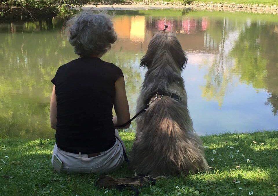 I cani nella Pet Therapy