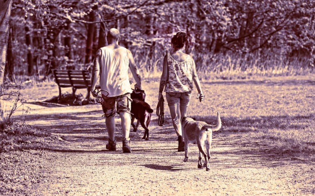 The Walking Dogs (ovvero: Passeggiate a 6 zampe!)
