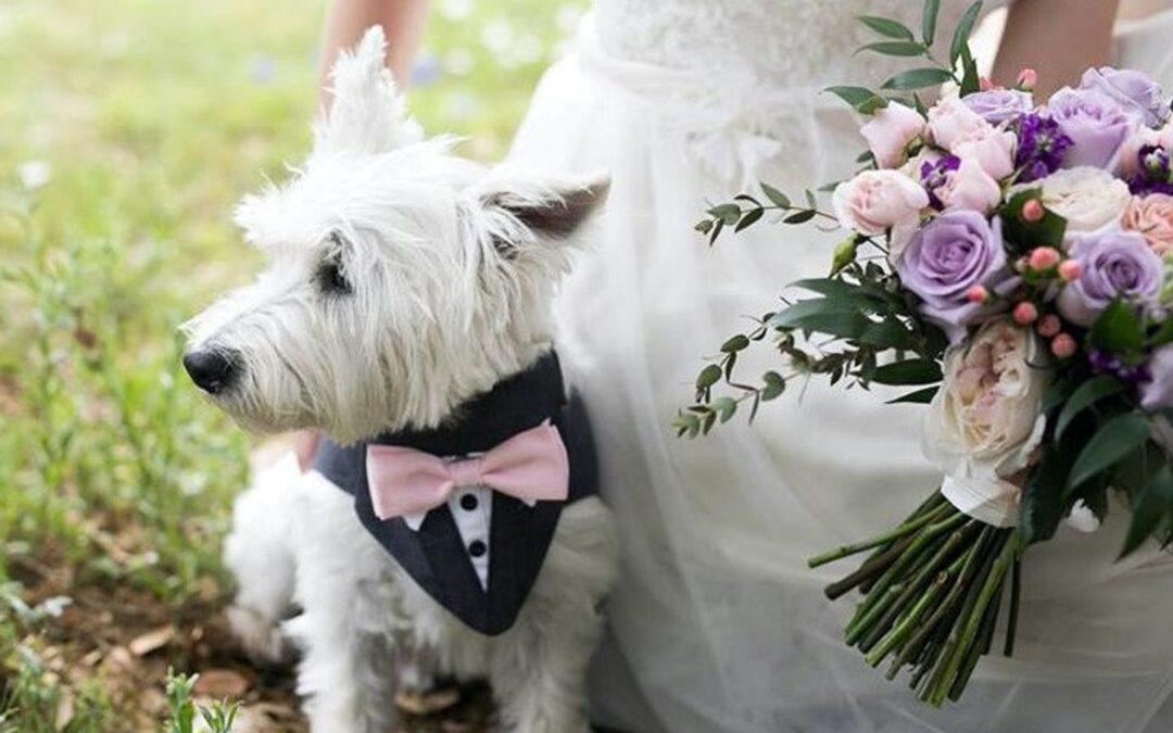 Mi sposo: posso portare il mio cane alla cerimonia?